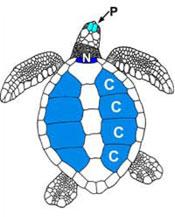 tartaruga Venezia